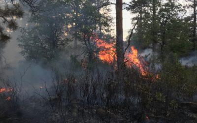 Tarantula Fire Info and Updates